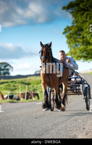 Horse and trap trotting down main raod on way to Appleby horse fair, Cumbria. - Stock Photo