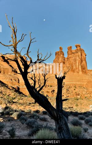 Tree, moon and The Three Gossips, Arches National Park, Moab, Utah USA - Stock Photo