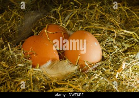 Three farm eggs on hay background - Stock Photo