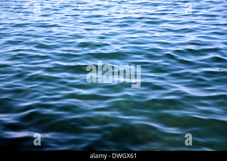 Blue green sea surface background with fishes full frame composition. - Stock Photo