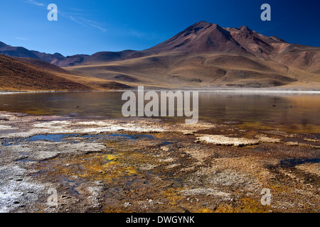 Laguna Miscanti and the Miniques Volcano high on the altiplano in the Andes Mountains in the Atacama Desert in northern - Stock Photo
