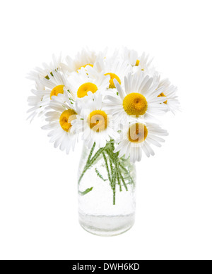 Wildflower bouquet of oxeye daisies isolated on white background - Stock Photo