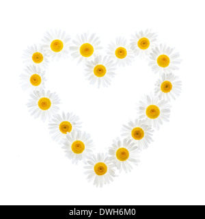 Heart shape of oxeye daisies isolated on white background - Stock Photo