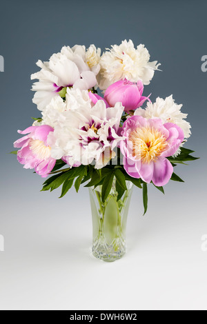 Bouquet of pink and white peony flowers on gray background, studio shot - Stock Photo