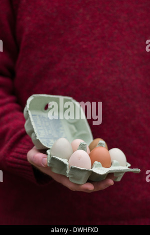 Hand holding an egg box containing free range home produced eggs - Stock Photo