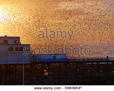 A murmuration of 10s of thousands of starlings roosting over aberystwyth royal pier in march 2014 - Stock Photo