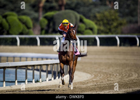 Arcadia, CA, USA. 8th Mar, 2014. Diversy Harbor with Gary Stevens aboard wins the China Doll Stakes at Santa Anita - Stock Photo