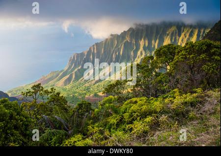 Kalalau lookout over the Napali coast from the Kokee State Park, Kauai, Hawaii, United States of America, Pacific - Stock Photo