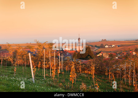 View over vineyards to the wine village Burrweiler in autumn at sunset, German Wine Route, Pfalz, Rhineland-Palatinate, - Stock Photo