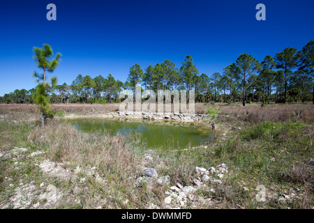 Everglades Restoration - Stock Photo