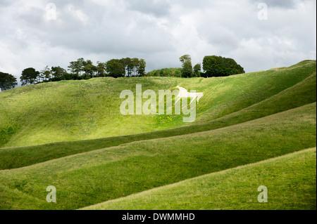 White horse, the Cherhill Downs, Wiltshire, England, United Kingdom, Europe - Stock Photo