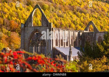 Tintern Abbey, Wye Valley, Monmouthshire, Wales, United Kingdom, Europe