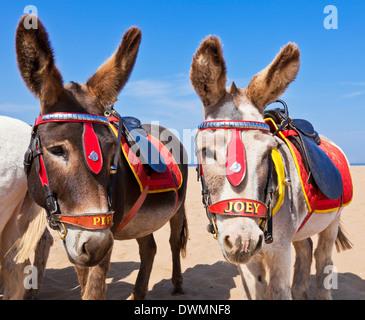 Donkeys on the beach, Skegness beach, Lincolnshire, England, United Kingdom, Europe - Stock Photo