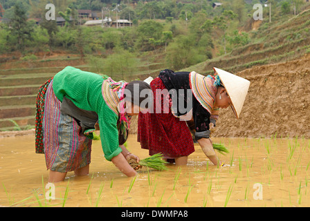Flower Hmong ethnic group women working in the rice field, Bac Ha area, Vietnam, Indochina, Southeast Asia, Asia - Stock Photo
