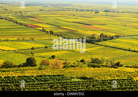 Vineyard landscape, near Bad Duerkheim, German Wine Route, Rhineland-Palatinate, Germany, Europe - Stock Photo