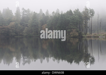 Misty morning reflections on an autumn morning at Tarn Hows, Lake District National Park, Cumbria, England, United - Stock Photo