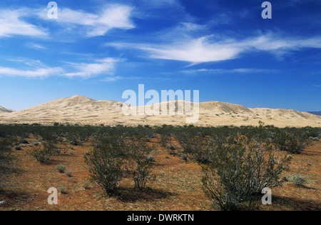 Elk248-2664 California, Mojave National Preserve, Kelso Dunes - Stock Photo
