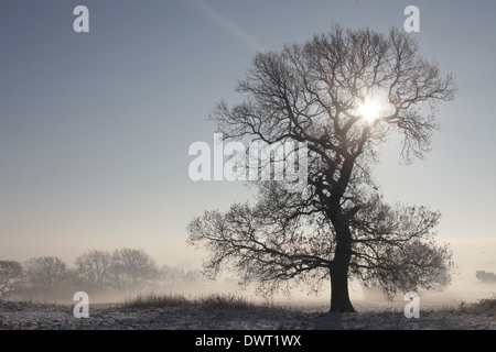Snow covered fields and silhouetted back lit trees, Gloucestershire, UK - Stock Photo
