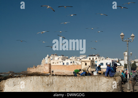 Fishermen at the fishing port with the walled medina in the background in Essaouira, Morocco