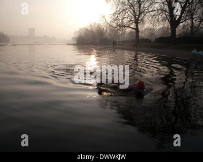 London, UK. 13th March, 2014. Early morning sswimming in the Serpentine Lake, Hyde Park, London.  At 9 degrees Centigrade - Stock Photo