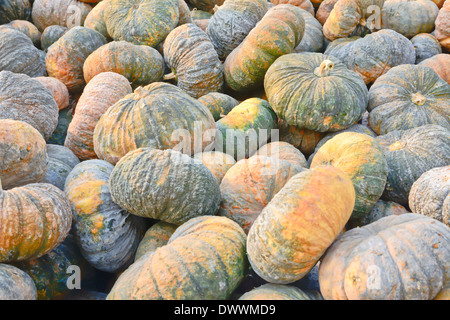 thai rotten pumpkin stack - Stock Photo