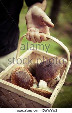 Midsection of man holding basket of mushrooms - Stock Photo