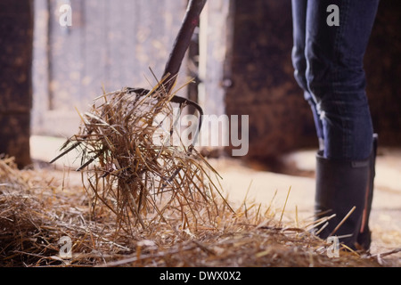 Midsection of farmer shoveling hay in barn - Stock Photo