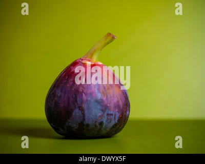 A ripe purple fig fruit of the common fig plant (Ficus carica) against a green background. - Stock Photo