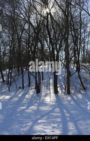 The sun shining through bare trees in winter. - Stock Photo