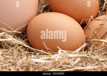 Freshly laid free range hens eggs in a bed of straw - Stock Photo