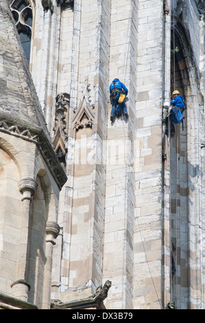 Stonemasons abseiling to repair York MInster or cathedral,  England, UK - Stock Photo