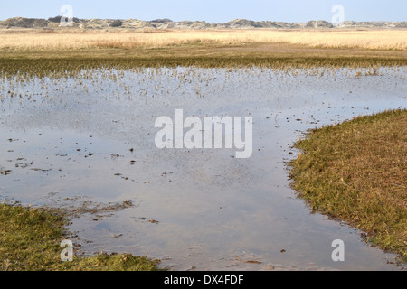 Nature reserve De Slufter on Texel, Netherlands. - Stock Photo