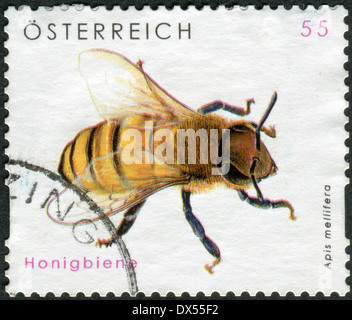 AUSTRIA - CIRCA 2009: Postage stamp printed in Austria, shows the Western honey bee (Apis mellifera), circa 2009