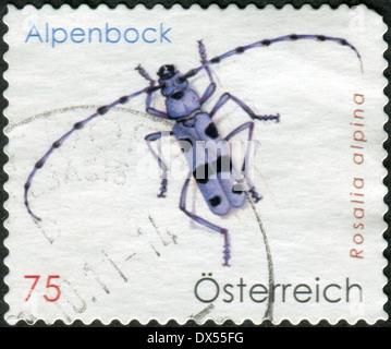 AUSTRIA - CIRCA 2009: Postage stamp printed in Austria, shows beetle Rosalia longicorn (Rosalia alpina), circa 2009