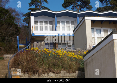 daffodils in bloom amongst beach huts at Branksome Dene Chine, Poole - Stock Photo