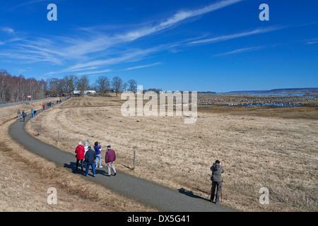 Bird watchers looking at flock of common cranes (Grus grus) at Lake Hornborga / Hornborgasjön in spring, Västergötland, - Stock Photo