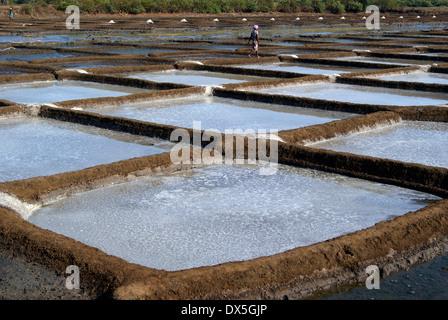salt evaporation ponds detailed view and Pattern of Salt farming Salt Pans in India - Stock Photo