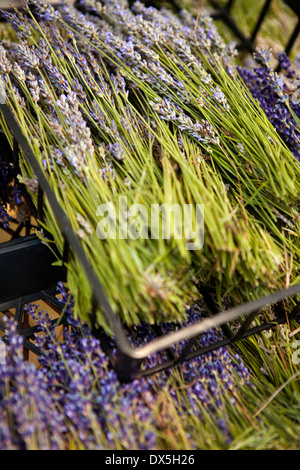 Dried lavender in crates, high angle view, close up - Stock Photo