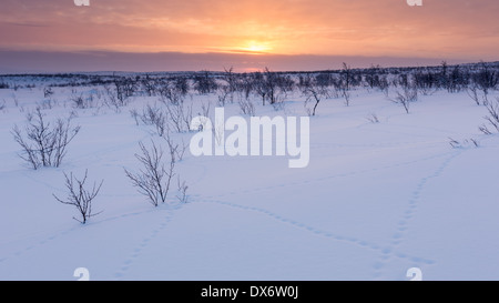 Willow grouse's tracks in the snow, Enontekiö, Lapland, Finland, EU - Stock Photo