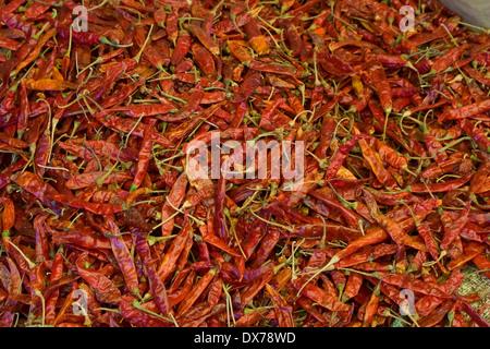 Asia, India, Karnataka, Madikeri, dried red chili peppers - Stock Photo