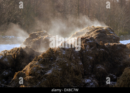 Steaming compost heap - Stock Photo