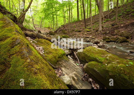 Large moss covered rocks line the edge of Tiffany Creek during a relatively dry spring in Hamilton, Ontario, Canada. - Stock Photo