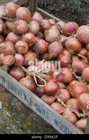 Onions in a wooden crate - Stock Photo