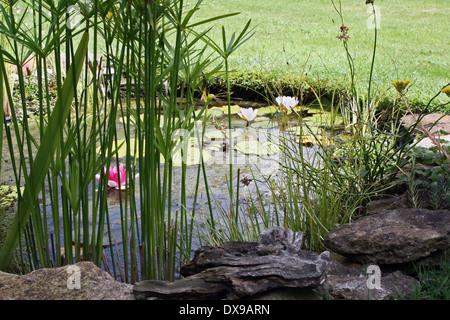 Garden wildlife pond with marginal plants and ornamental for Ornamental grasses for ponds