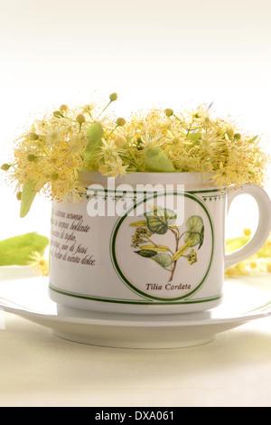 Lime tree tea - Stock Photo