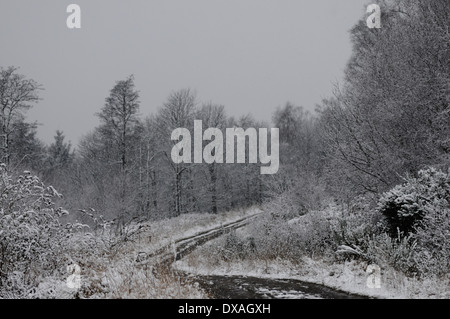 Snow cover forest track near Sherrifmuir, Stirling, Scotland. - Stock Photo