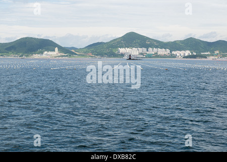 Coastal landscape in South Korea with buildings, mountains, and long line oyster farming as seen from the sea - Stock Photo