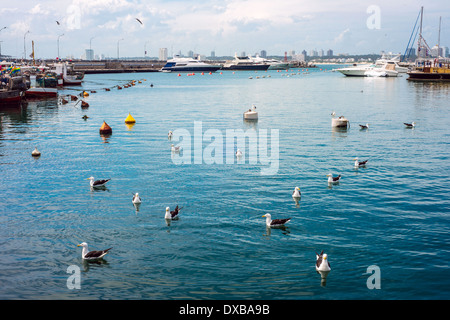 Yachts and boats, Punta del Este, Uruguay - Stock Photo