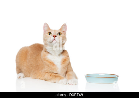 Orange cat with empty food dish looking up. - Stock Photo