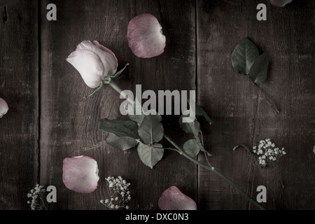 Desaturated arrangement of pink roses and baby's breath on rustic wood shot from above - Stock Photo